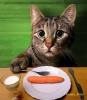 Изображение пользователя добрый кот.